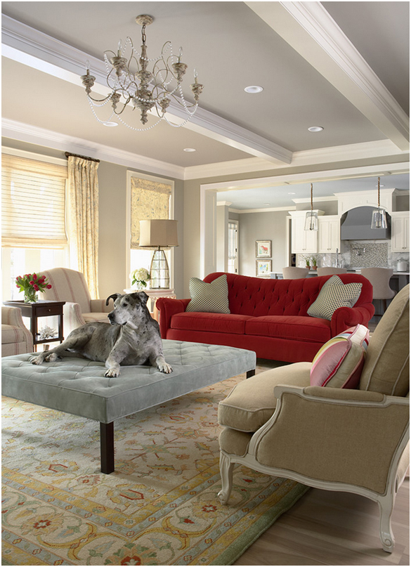 Loving and Living with our Pets! Home Design Tips for Animal Lovers